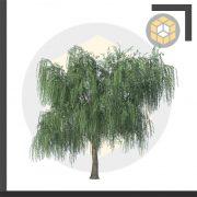 مجموعه ابجکت درخت اسکچاپ