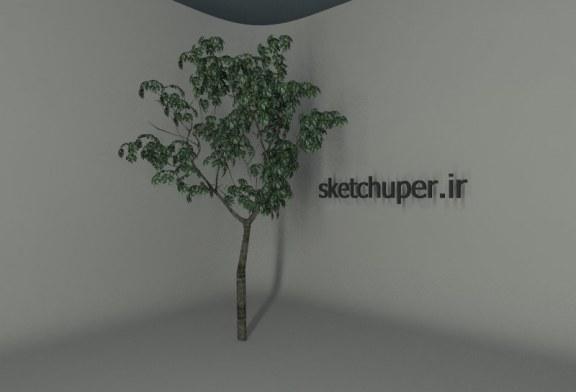درخت شماره دو