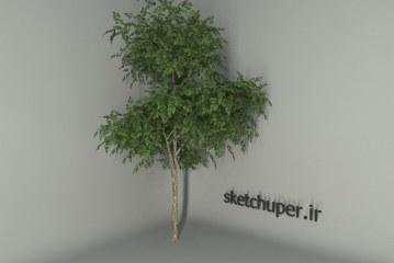 درخت شماره پنج