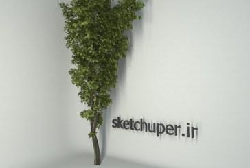 درخت شماره هشت